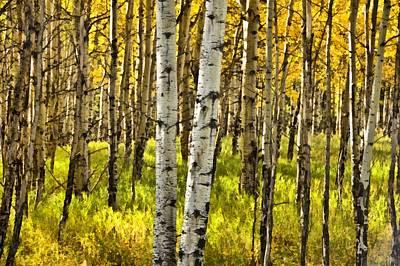 Colorado Fall Aspens 6 Print by Angelina Vick