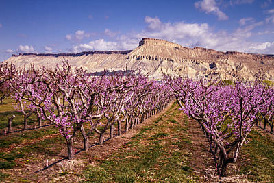 Colorado Orchards In Bloom Print by Teri Virbickis