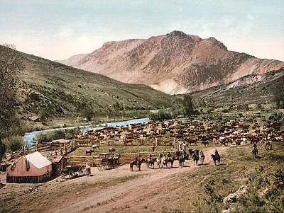 Cattle Drive Digital Art - Colorado Roundup 1897 by Unknown
