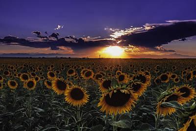 Colorado Sunflowers Original by Teri Virbickis