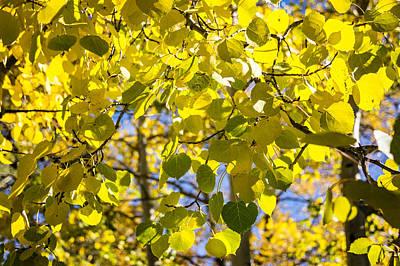 Colorado Photograph - Colorful Changing Aspens Abstract - Estes Park Colorado by Brian Harig