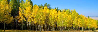 Colorful Colorado Turning Aspens Mountain Landscape Scene Photograph - Colorful Colorado 2 by Brian Harig