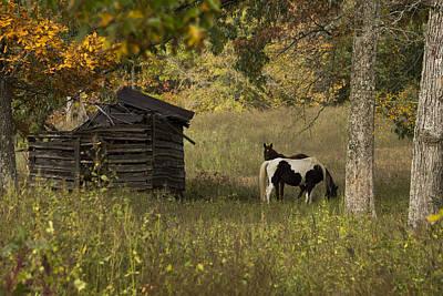 Murray Kentucky Photograph - Colorful Display by Amber Kresge
