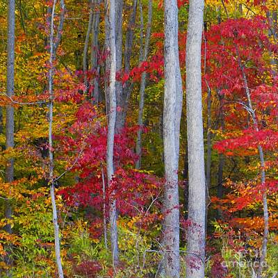 Colorful Fall Forest Print by Scott Cameron
