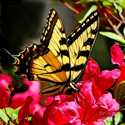 Colorful Flying Garden Print by Nava Thompson