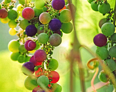 Colorful Grapes Print by Peggy Collins