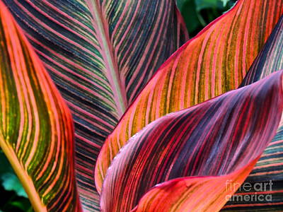 Colorful Leaves Print by Eve Spring