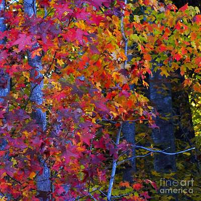 Colorful Maple Leaves Print by Scott Cameron