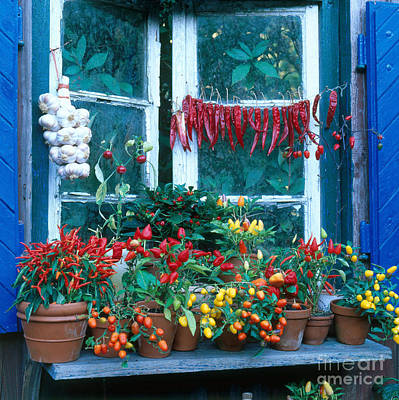 Colorful Peppers Print by Hans Reinhard