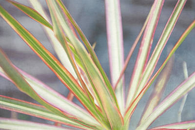 Colorful Plant Print by Louise Hill