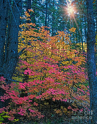 West Fork Photograph - Colorful Rays by Brian Lambert