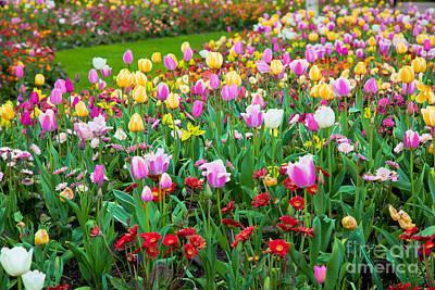 Floral Photograph - Colorful Spring Summer Garden by Michal Bednarek