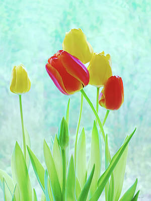 Colorful Spring Tulip Flowers Print by Jennie Marie Schell