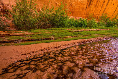 Holes In Sandstone Photograph - Colorful Streambed - Coyote Gulch - Utah by Gary Whitton