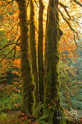 State Parks In Oregon Photograph - Colors In The Rainforest by Adam Jewell
