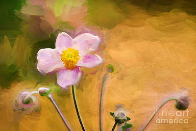 Thimbleweed Photograph - Colors Of October by Darren Fisher