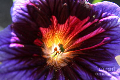 Flower Photograph - Colors Of Summer by Neal  Eslinger