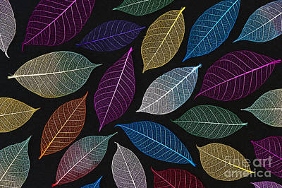 Coloured Leaf Skeleton Pattern Print by Tim Gainey