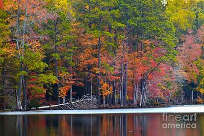Autumn Photograph - Colourful Leaves by Scott Cameron