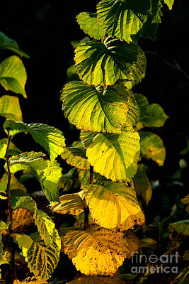 Autumn Photograph - Colourful Plant In Autumn In Late Afternoon Light by Kerstin Ivarsson