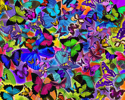 Euphoria Photograph - Colours Of Butterflies by Alixandra Mullins