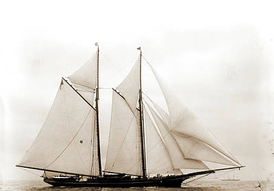 Columbia, Columbia Schooner, Yachts Print by Litz Collection