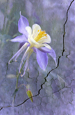 Canna Photograph - Columbine On Cracked Wall by James Steele