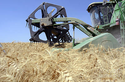 Combine Harvester  Print by Shay Fogelman