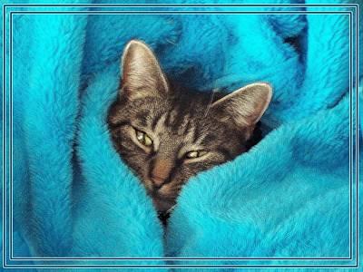 Comfy Cat Original by Joy Nichols
