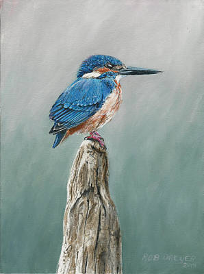 Kingfisher Painting - Common Kingfisher by Rob Dreyer AFC
