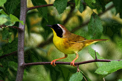 Common Yellowthroat Warbler Original by John Absher