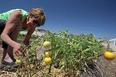 60s Photograph - Community Garden Volunteer by Jim West