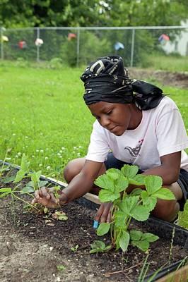 Community Garden Volunteer Weeding Print by Jim West