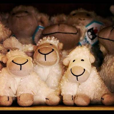 Sheep Photograph - Company Of Lambs by Kurt Skeels