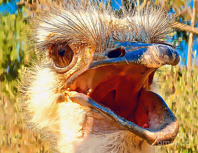 Complaining Ostrich Original by Dieter  Lesche