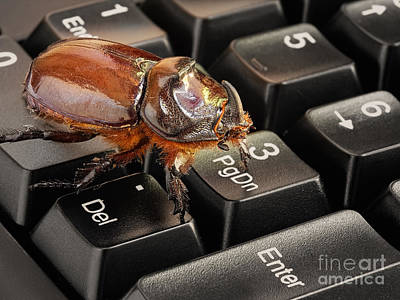 Keypad Photograph - Computer Bug by Sinisa Botas