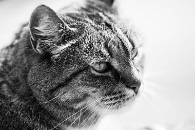 Cat Photograph - Concentrating Cat by Hakon Soreide