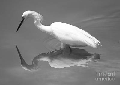 Egret Photograph - Concentration by Carol Groenen