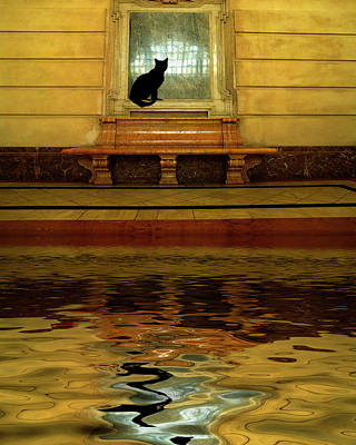 Window Bench Photograph - Concept Of Black Cat And Water by Jaynes Gallery
