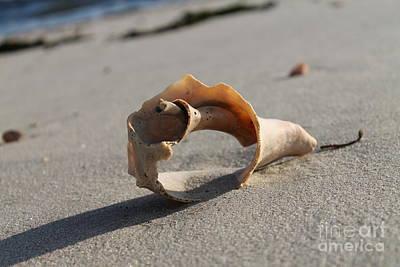 Conch On The Beach Print by John Doble