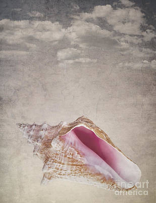 Conch Shell On Vintage Background Print by Jane Rix