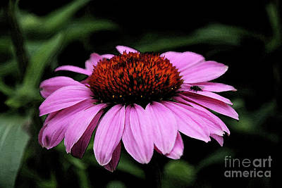 Abstracted Coneflowers Digital Art - Coneflower With Bug by Christiane Schulze Art And Photography