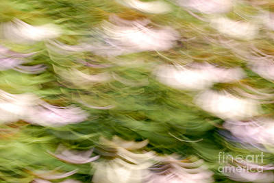 Abstracted Coneflowers Photograph - Coneflowers In The Breeze by Paul W Faust -  Impressions of Light