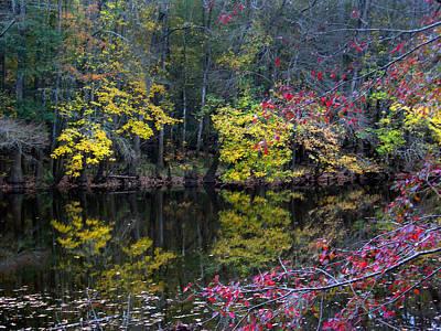 Congaree Swamp Print by Skip Willits