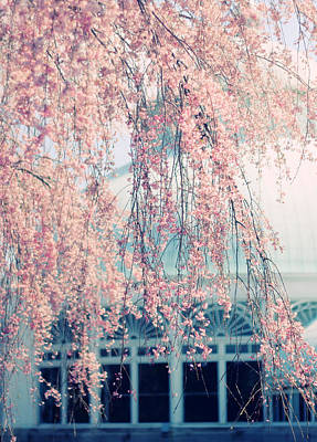 Cherry Trees Photograph - Conservatory  In Spring by Jessica Jenney