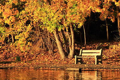 Autumn Photograph - Contemplation Bench by Stephen Hobbs