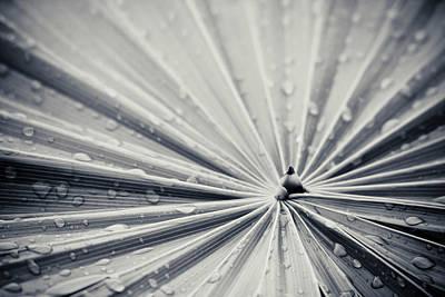 Garden Photograph - Convergence by Adam Romanowicz