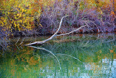 Photograph - Cool Reflections by Li Newton