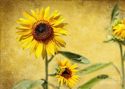 Cool Sunflowers Print by Sabrina L Ryan