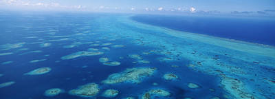 Belize Photograph - Coral Reef In The Sea, Belize Barrier by Panoramic Images